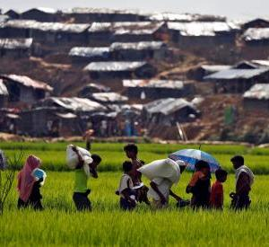 Denmark to provide additional 40 crore to support Rohingyas