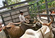 Mumbai court strikes down beef ban