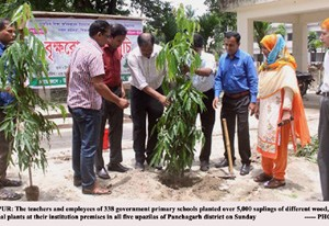 Primary school teachers plant 5,000 saplings in hour