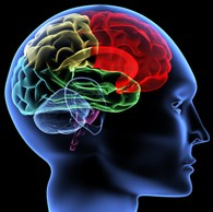 How lexis is stored and organized in our brains and implications for the MFL classroom